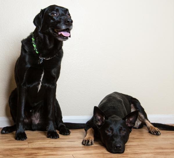 Bailey & Colt