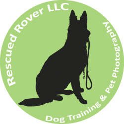 Rescued Rover Dog Training