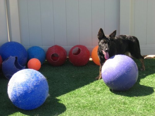 Top 5 Durable Toys for Large Breed Dogs