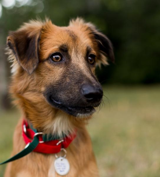 Colorado Adoptable Puppy