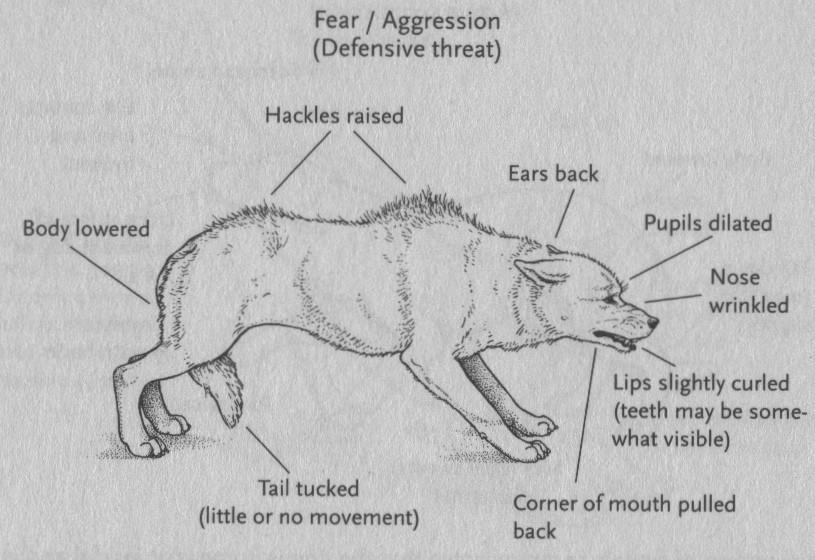 fear-aggression-blog-body-language-fear-aggression-e1306232849673